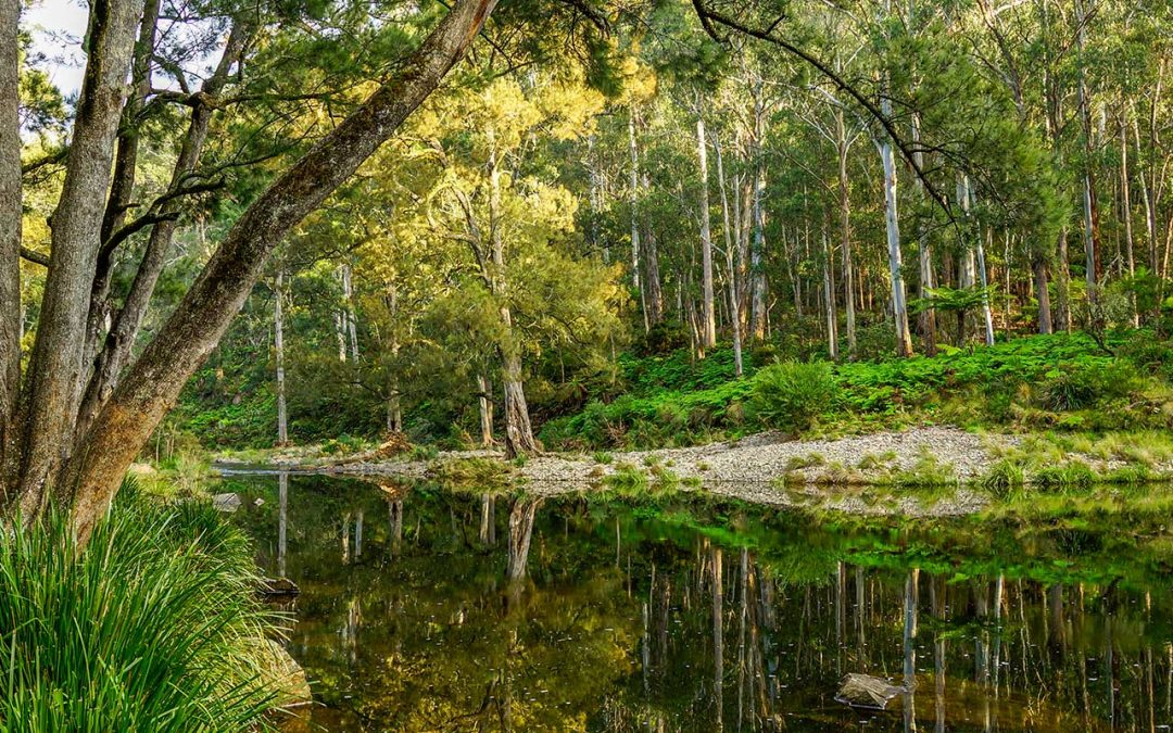 Campsite Review | Wattle Flat Camping Area